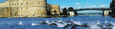 Dolphin watch Taranto