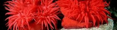 Schede organismi marini